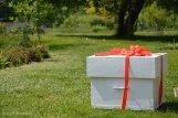 prezent niespodzianka